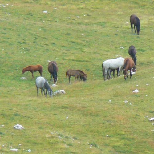 Do Albanii 2009 -Durmitor w Czarnogórze