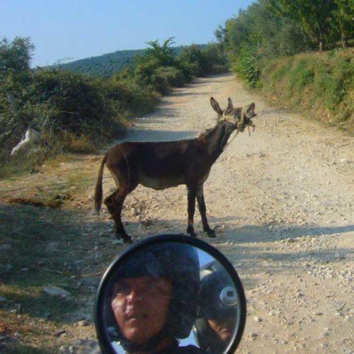 Do Albanii 2009 - osioł na drodze i bezdroża w drodze do Gjirokastra w Albanii