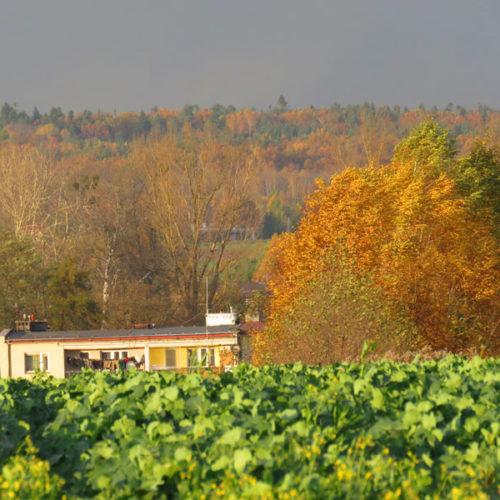 Deszczowa jesień na Roztoczu Wschodnim z zakończeniem sezonu