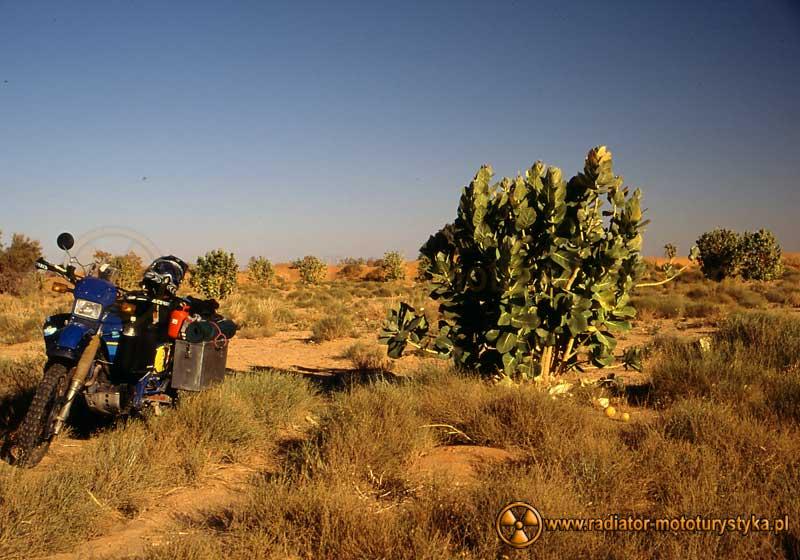 Djanet Tamm w Algierii