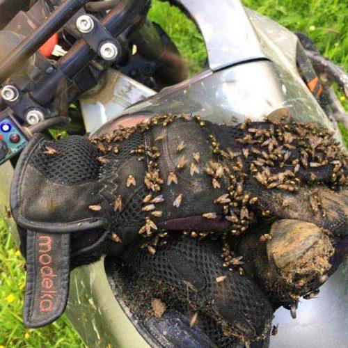 Enduro Polulanka - piękno i piekło mordoru - Ukraina - połoniny motocyklowo - król much